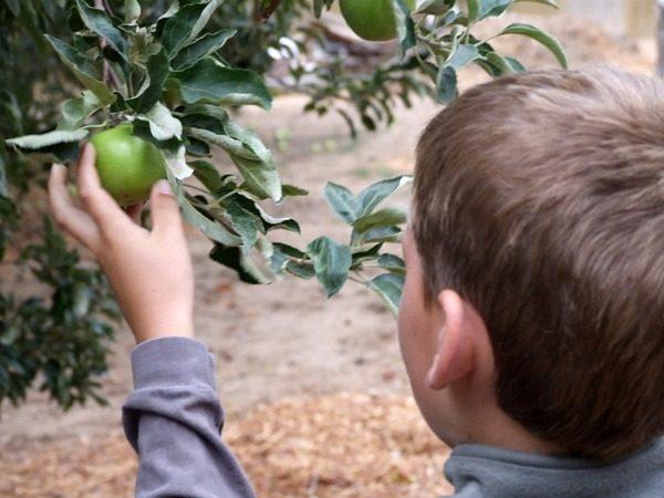 RecipeBoy picking apples