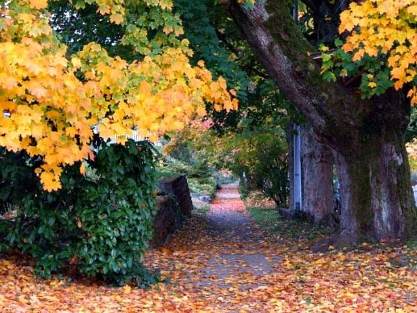 Fall in Tacoma, Washington