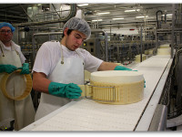 Asiago Cheese Factory 3