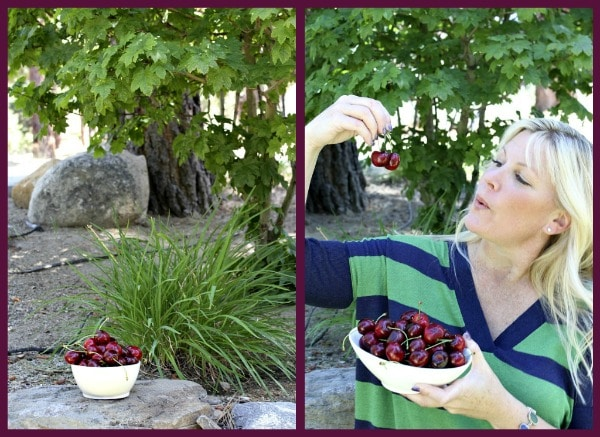 Fresh cherries in a bowl in a backyard setting with a girl holding cherries and admiring them