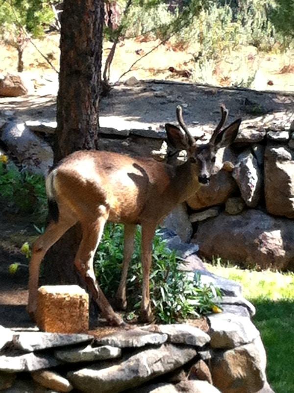 Seed Block and Deer