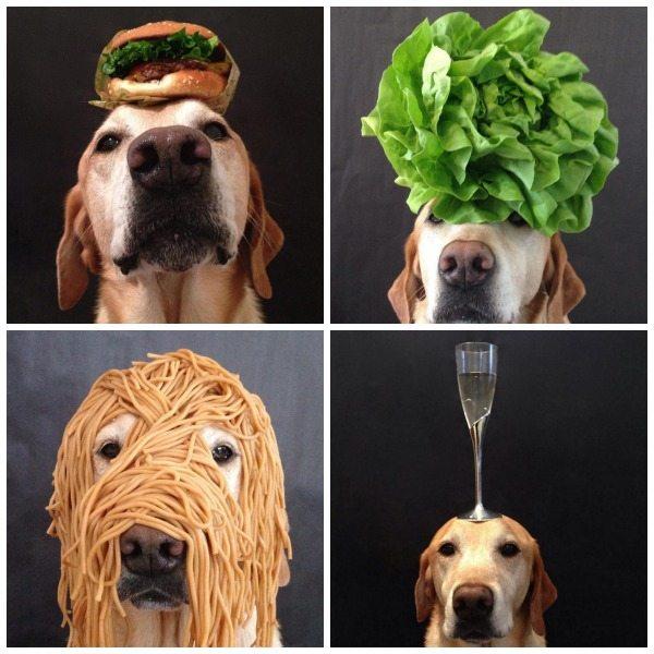 Instagram Dog Account