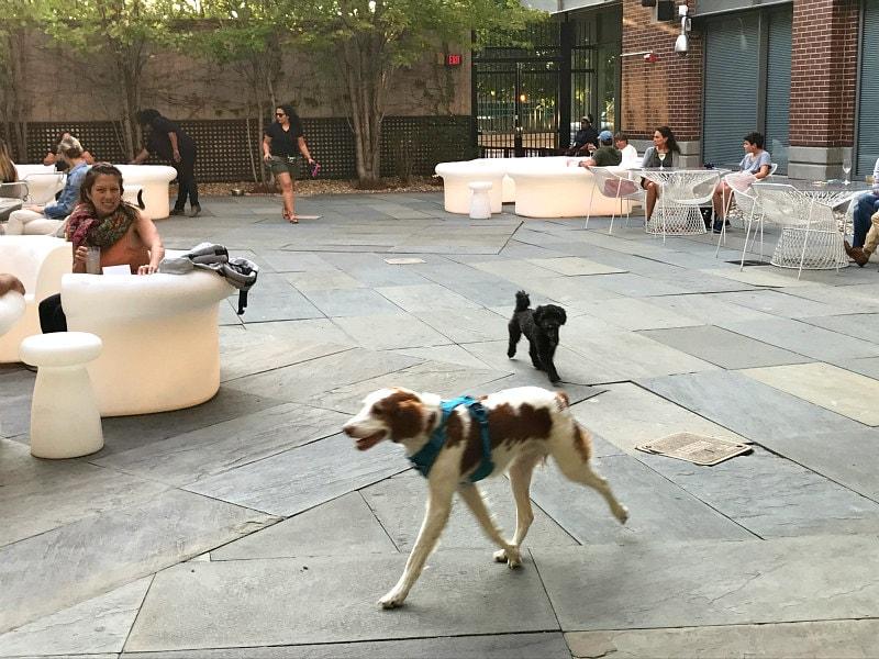 Liberty Hotel Boston - Dog Happy Hour