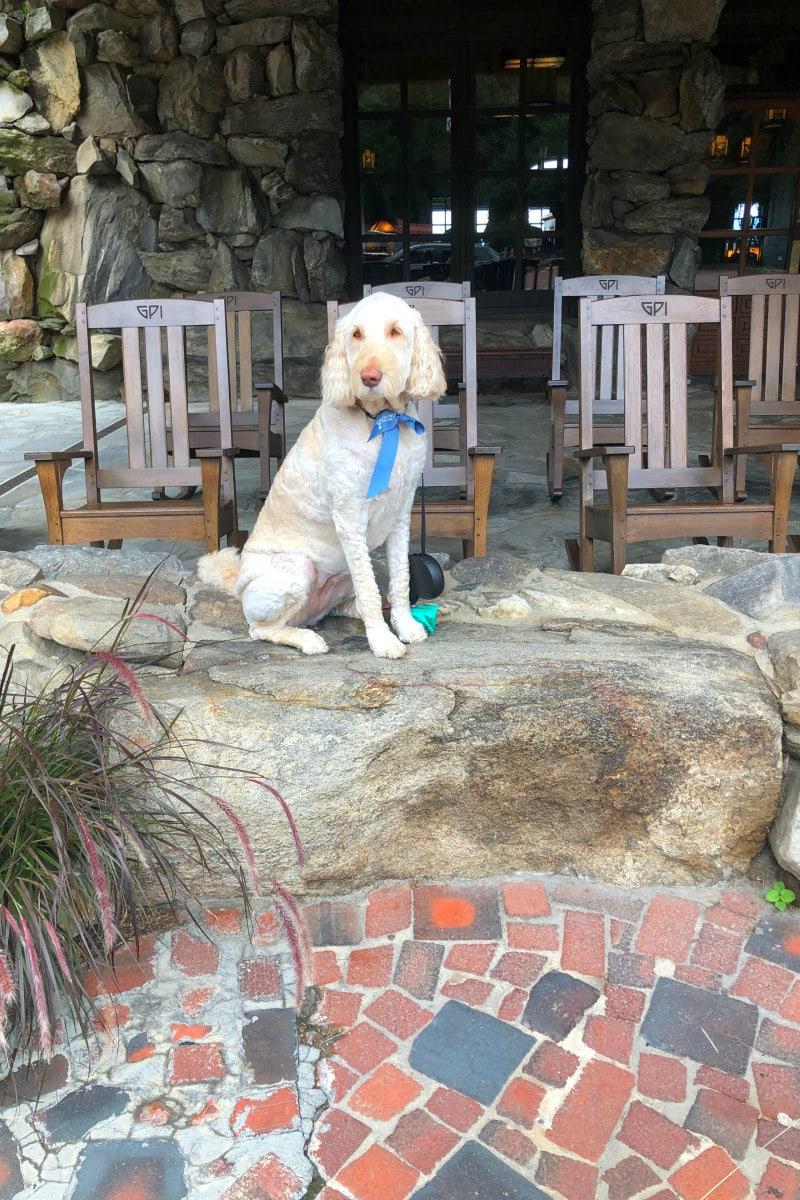 Dog at Omni Grove Park Inn