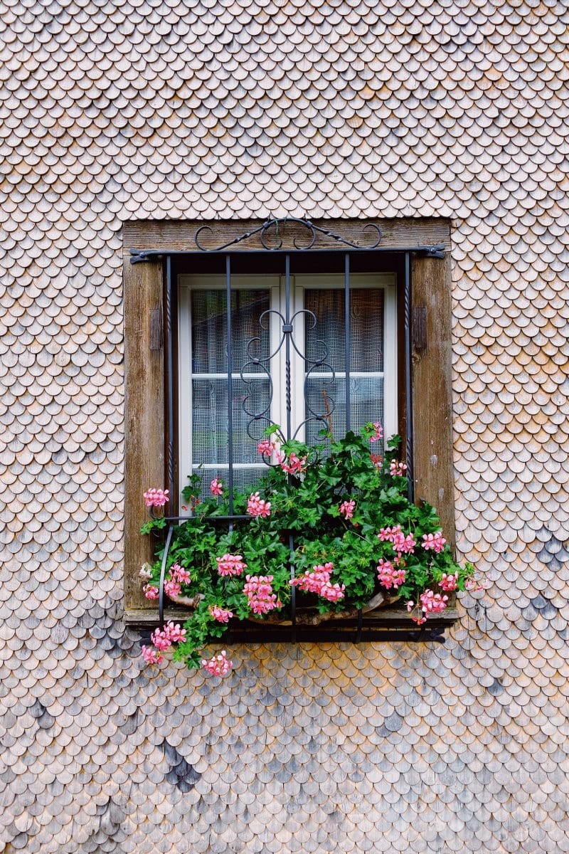 window box with pink flowers in the village of Brienz, Switzerland